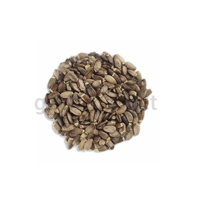 Semințe de armurariu